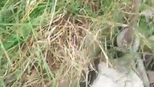 Foseptiğe düşen keçiyi itfaiyeciler kurtardı