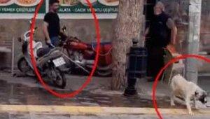 Köpeği fırça sapıyla döven kişiye 4 bin 495 lira ceza