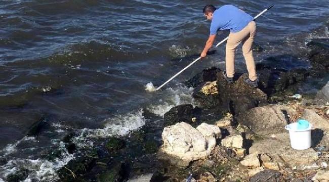 Küçükçekmece Gölü'ndeki balık ölümleri araştırılıyor