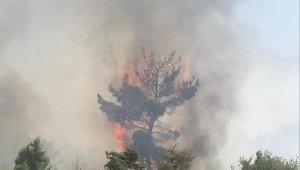 Manisa'da anız yangını ormanlık alana sıçradı