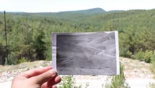 Sinop'taki Çorak Arazi 40 Yılda Ormana Dönüştürüldü