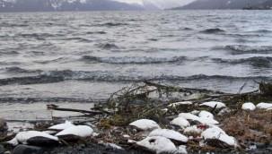 """Ilık Su """"Damlası"""" Bir Milyon Deniz Kuşunun Telef Olmasına Neden Oldu"""