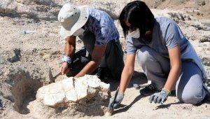 Kayseri'deki ilk kez 7,5 milyon yıllık kaplumbağa fosili bulundu