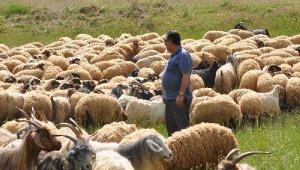 TÜDKİYEB: Türkiye koyun sütü üretiminde dünya birincisi