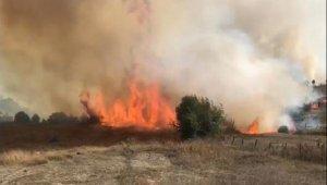 Kandıra'da orman yangını