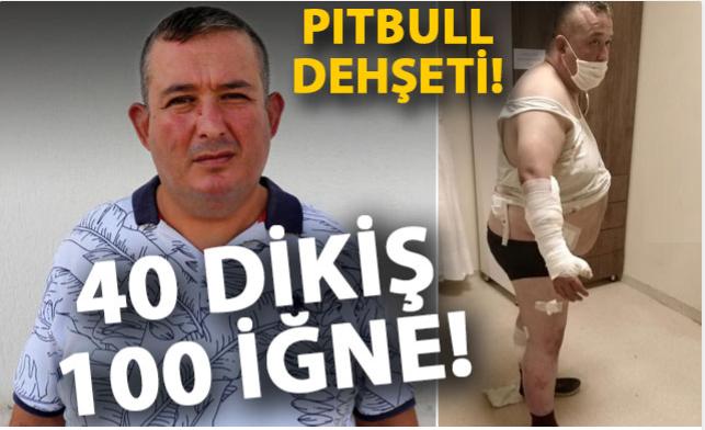 Oteldeki pitbull'ların saldırısına uğradı, 40 dikiş atılıp, 100 iğne yapıldı