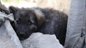 Van'da 5 köpeğin ölümünde zehirlenme şüphesi