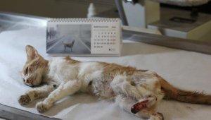 Yaralı sokak kedisinin patisi ampute edildi