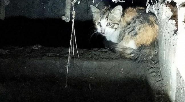 Mazgala sıkışan kedi, kurtarıldı