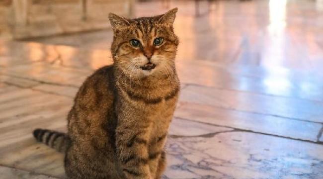 Ayasofya'nın kedisi Gli yaşamını yitirdi