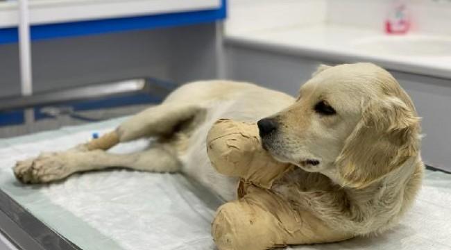 Pamuk adlı köpeğin tüfekle vurulup, patilerinin kesildiği ortaya çıktı