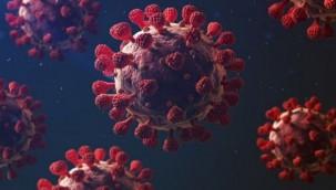 Koronavirüse karşı yeni umut: Aşı gibi etkili