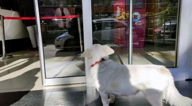 Sahibini 5 gündür hastane kapısında bekleyen köpek, dünya basınında