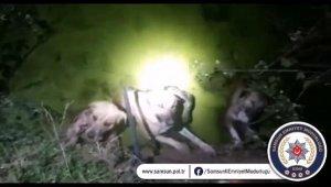Su kanalına düşen 4 köpeği polis ve bekçiler kurtardı