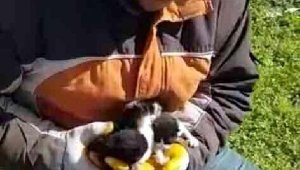 Poşetle çöpe atılan 4 yavru kediyi belediyenin temizlik işçileri kurtardı