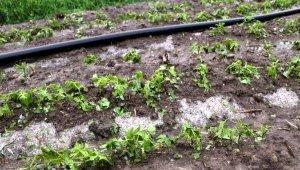 Afyon'da dolu tarım arazilerine zarar verdi