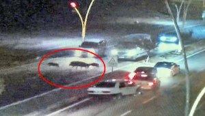 Domuzlara çarpmamak isteyen 4 araç birbirine girdi; kaza kamerada
